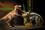 見て・触れて・学べる体験型ショー「恐竜どうぶつ園」